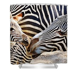 Zebra Mother And Calf Shower Curtain
