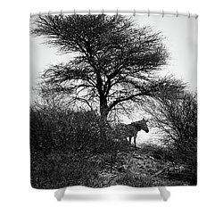 Shower Curtain featuring the photograph Zebra On A Hill  by Ernie Echols