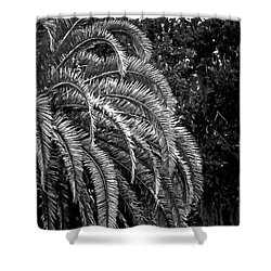 Shower Curtain featuring the photograph Zebra Palm by DigiArt Diaries by Vicky B Fuller
