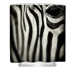 Zebra Shower Curtain by Perry Webster