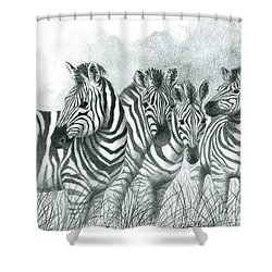 Shower Curtain featuring the drawing Zebra Quartet by Phyllis Howard