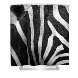Zebra Stripes Shower Curtain by Racheal  Christian