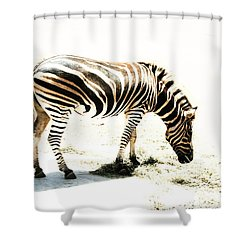 Shower Curtain featuring the photograph Zebra Stripes by Stephen Mitchell