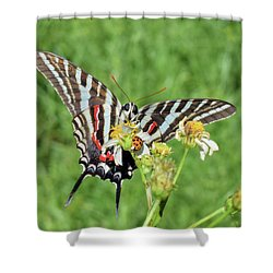 Zebra Swallowtail And Ladybug Shower Curtain