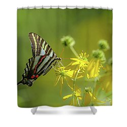 Shower Curtain featuring the photograph Zebra Swallowtail Butterfly by Lori Coleman
