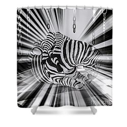 Zebra Time Shower Curtain