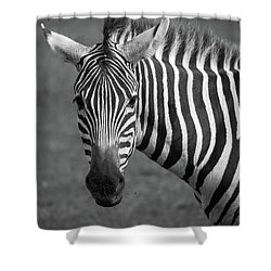 Zebra Shower Curtain by Trace Kittrell