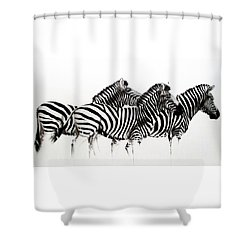 Zebras - Black And White Shower Curtain