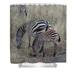 Zebras In Kenya 1 Shower Curtain