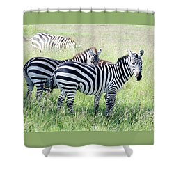 Zebras In Serengeti Shower Curtain by Pravine Chester