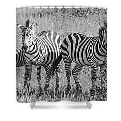 Shower Curtain featuring the photograph Zebras In Thought by Pravine Chester