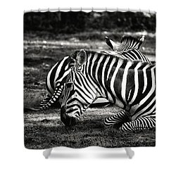 Zebras Shower Curtain by Nikki McInnes