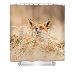 Zen Fox Series - Zen Fox 2.7 Shower Curtain by Roeselien Raimond