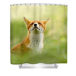 Zen Fox Series - Zen Fox Does It Agian Shower Curtain by Roeselien Raimond
