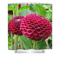 Zinnia Duet Shower Curtain