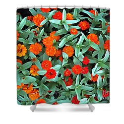 Shower Curtain featuring the photograph Zinnia Flower - Profusion Orange by Janine Riley