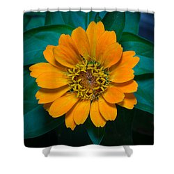 Zinnia Hybrida Shower Curtain