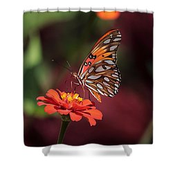 Zinnia With Butterfly 2668 Shower Curtain
