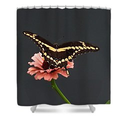 Zinnia With Butterfly 2708  Shower Curtain