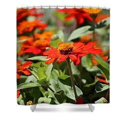 Zinnias In Autumn Colors Shower Curtain