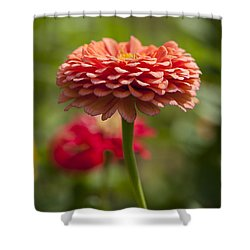 Zinnia Portrait Shower Curtain