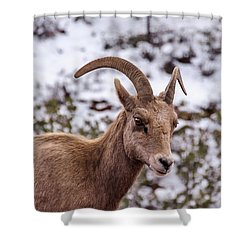 Zion Bighorn Sheep Close-up Shower Curtain