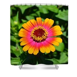 Flame On Shower Curtain by Kathy Kelly