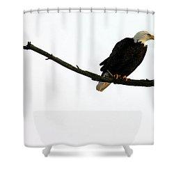 Bald Eagle 120501 Shower Curtain