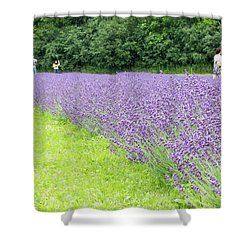Blue Lavender Shower Curtain