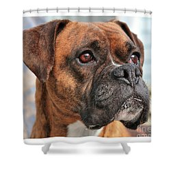 Shower Curtain featuring the photograph Boxer by Debbie Stahre