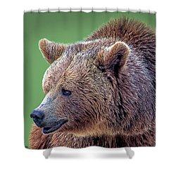 Brown Bear 5 Shower Curtain