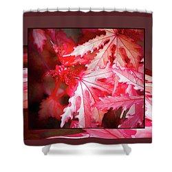 Celebration - Shower Curtain