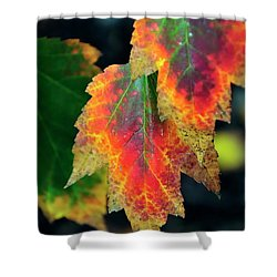 Shower Curtain featuring the photograph Fall Leaves 6072 by Jerry Sodorff