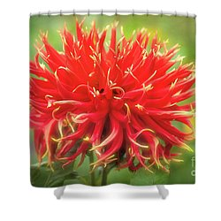 Glorious Sho-n-tell Dahlia Shower Curtain