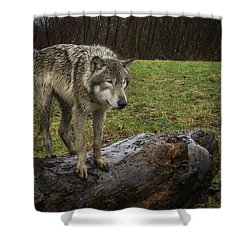 Hangin On The Log Shower Curtain
