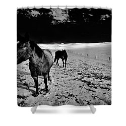 Shower Curtain featuring the photograph Horses On The Palouse by David Patterson