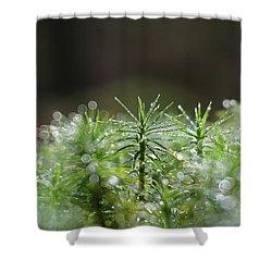 Moss Shower Curtain