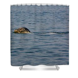 Pacific Harbor Seal Shower Curtain