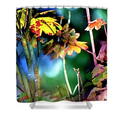 Shower Curtain featuring the photograph Red Maple Yellow by Jerry Sodorff