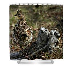Ruffed Grouse 50701 Shower Curtain