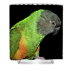 Shower Curtain featuring the photograph Senegal Parrot by Debbie Stahre