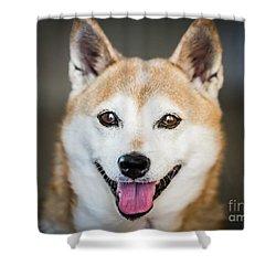 Shiba Inu Shower Curtain