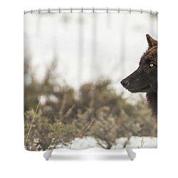 W15 Shower Curtain