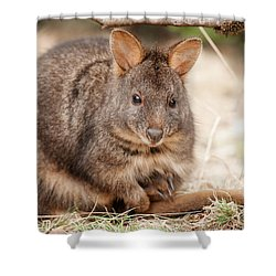 Shower Curtain featuring the photograph Australian Bush Wallaby Outside During The Day. by Rob D