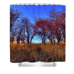 Shower Curtain featuring the photograph Autumn Light by David Patterson
