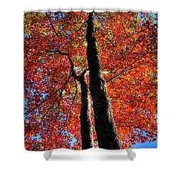 Shower Curtain featuring the photograph Autumn Reds by David Patterson