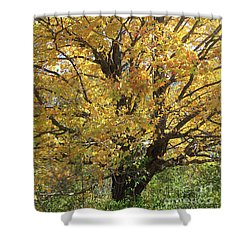 2018 Edna's Tree Up Close Shower Curtain