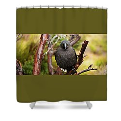 Shower Curtain featuring the photograph Black Currawong Resting On A Tree Branch by Rob D