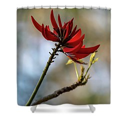 Coral Tree Flowers Shower Curtain