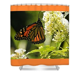 M White Flowers Collection No. W12 - Monarch Butterfly Sipping Nectar Shower Curtain
